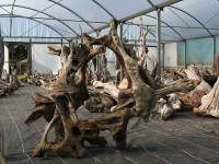 driftwood_arch_3
