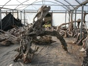 driftwood_arch_2