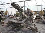 driftwood_arch_1