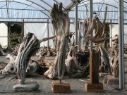 driftwood_sculptures_1
