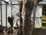 tall_driftwood_sculptures