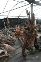 New Driftwood Delivery