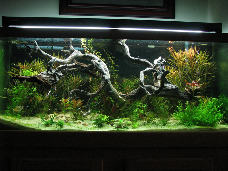Aquarium Driftwood UK