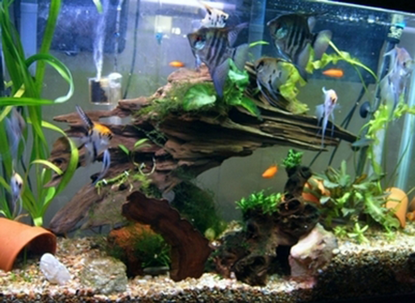 Aquarium driftwood aquarium driftwood driftwood uk for Aquarium wood decoration